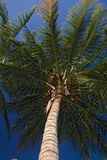 Africa landscape 008 palm. Africa landscape 008 under palm Royalty Free Stock Photography