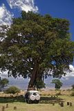 Africa landscape 015 ngorongoro tree. Africa landscape 015 Ngorongoro car under tree royalty free stock photos