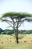 Africa landscape Royalty Free Stock Photos