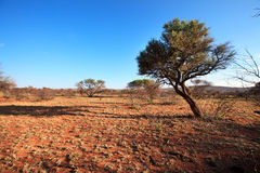 Africa landscape. Madikwe natural reserve, South Africa royalty free stock image