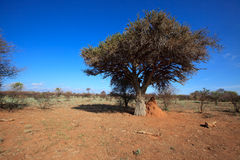 Africa landscape. In Madikwe nature reserve, South Africa royalty free stock photography