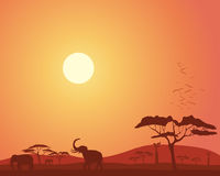 Africa landscape. An illustration of a colorful african landscape with acacia trees hills elephants and roosting birds under a bright sunset sky Stock Photo
