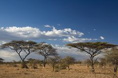 Africa landscape. In serengeti add. format royalty free stock photo