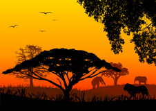Africa landscape. With sunset color Royalty Free Stock Photography