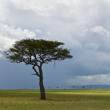 Africa landscape, Serengeti National Park. Serengeti, Tanzania stock photo