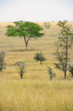 Africa landscape, Serengeti National Park Royalty Free Stock Photo