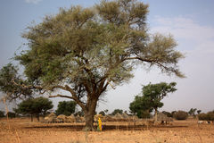 Africa landscape. And village huts stock images
