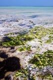 africa linia brzegowa spienia piankowego Zanzibar Obraz Stock