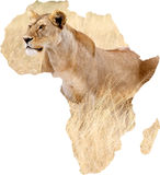 Africa and lioness (Panthera leo) Stock Images