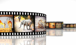 Africa movie. 3d image of film strip with african animals Stock Photos