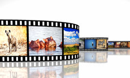 Africa movie. 3d image of film strip with african animals Royalty Free Stock Photography