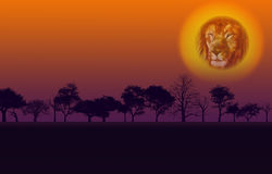 Africa Nature Sunset Stock Images