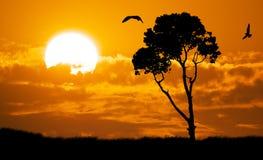 Africa nature sunset. Africa safari nature sunset. Element of design Stock Photo