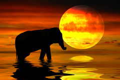 Africa Night Royalty Free Stock Images
