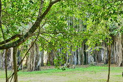 Africa, picturesque area of Mont Choisy in Mauritius royalty free stock image