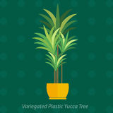 Africa plants. Palm trees, flowers and green grass, white background Stock Photography