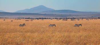 Africa prairie Stock Photo