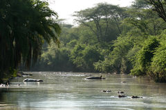 africa river safari serengeti tanzania Arkivfoto