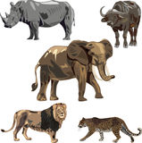 Africa's five wild beasts Stock Photo