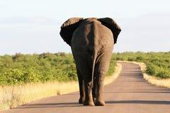 africa s södra djurliv Arkivfoto