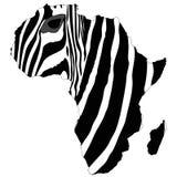 Africa's zebra Stock Photos
