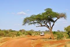 africa safari Zdjęcie Stock