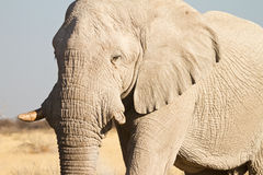 Africa Safari Stock Photo