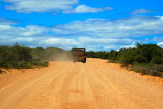 africa safari Arkivbilder