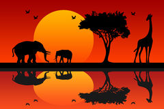 Africa. Safari landscape of the African savannah with giraffe and elephants Royalty Free Stock Photography