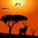 Africa safari - silhouettes of wild animals Royalty Free Stock Images