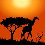 Africa safari - silhouettes of wild animals Stock Photo