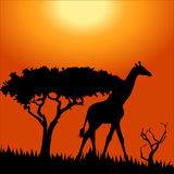 Africa safari - silhouettes of wild animals Stock Images