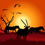 Africa safari - silhouettes of wild animals Royalty Free Stock Image