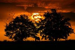 Africa safari trip landscape. Sunset in africa travel landscape Stock Photos