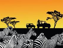 Africa safari vector. Vector illustration of an africa safari scene Royalty Free Stock Image