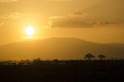 africa safarisolnedgång Fotografering för Bildbyråer