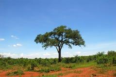 Africa savanna Stock Image