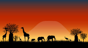 Africa savanna landscape vector. Vectored illustration as silhouette of african skyline of savanna at sunset with kilimanjaro mountain on background and Stock Photos