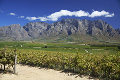 africa södra vingård Arkivfoton