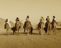 Africa in sephia. Camels caravan on desert in Africa Stock Images