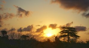 africa sundown Royaltyfri Fotografi