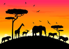africa sunset Royalty Free Stock Photography