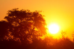 Africa sunset. The best sunsets in the world Stock Photography