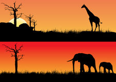Africa sunset and animals Stock Images
