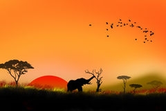 Africa sunset illustration Royalty Free Stock Images