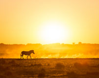 Africa Sunset Landscape Royalty Free Stock Images