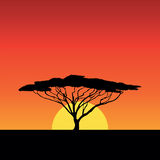 Africa sunset. Tree sun silhouette Royalty Free Stock Image