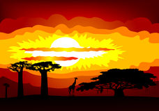Africa sunset - vector Stock Image