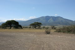 Africa,Tanzania Ngorongoro Crater Stock Image