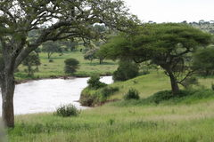 Africa Tanzania Tarangire River Park Reserve Royalty Free Stock Images